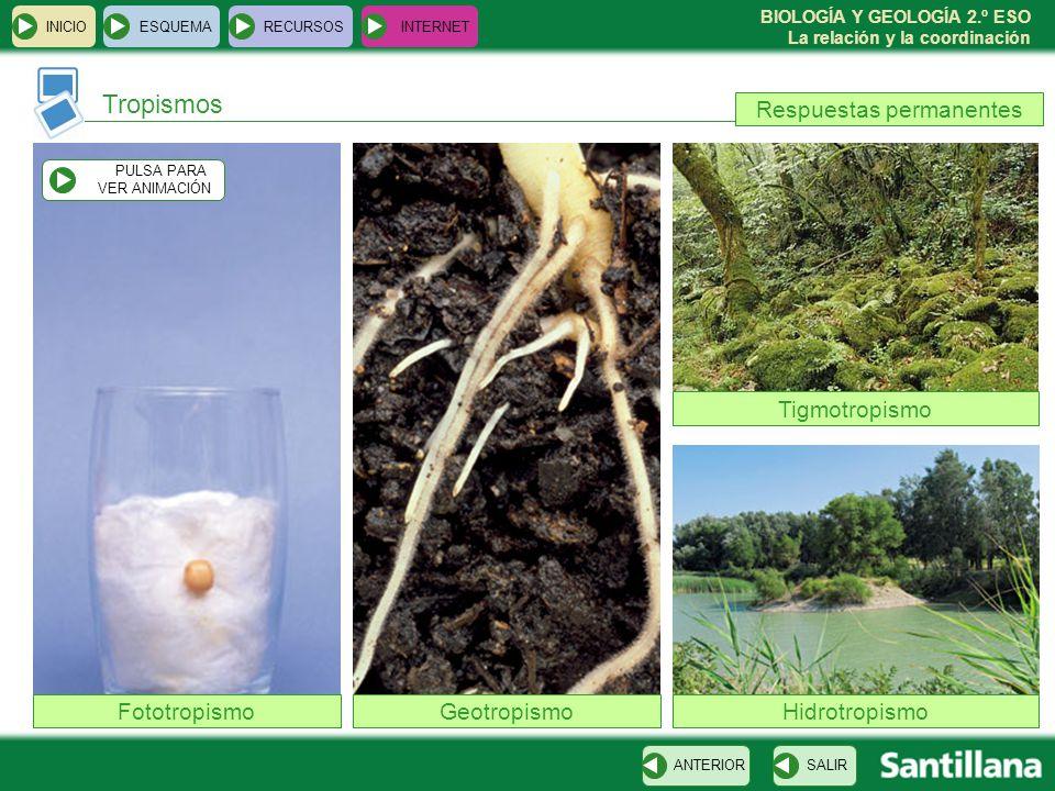BIOLOGÍA Y GEOLOGÍA 2.º ESO La relación y la coordinación Tropismos INICIOESQUEMARECURSOSINTERNET SALIRANTERIOR FototropismoGeotropismo Tigmotropismo