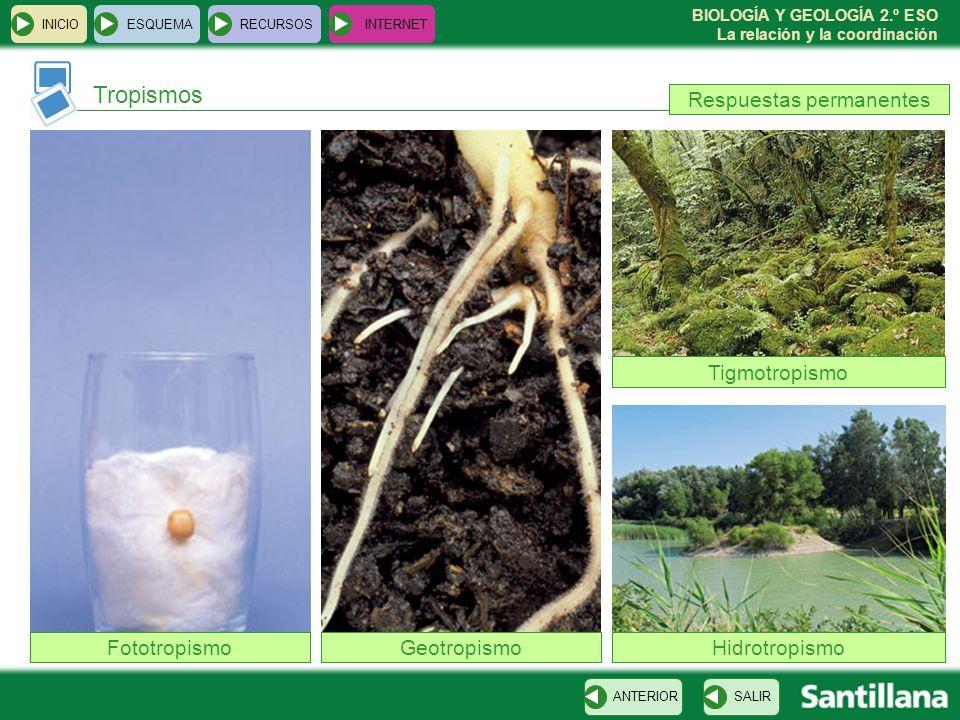 BIOLOGÍA Y GEOLOGÍA 2.º ESO La relación y la coordinación VOLVER Tropismos INICIOESQUEMARECURSOSINTERNET SALIRANTERIOR FototropismoGeotropismo Tigmotr