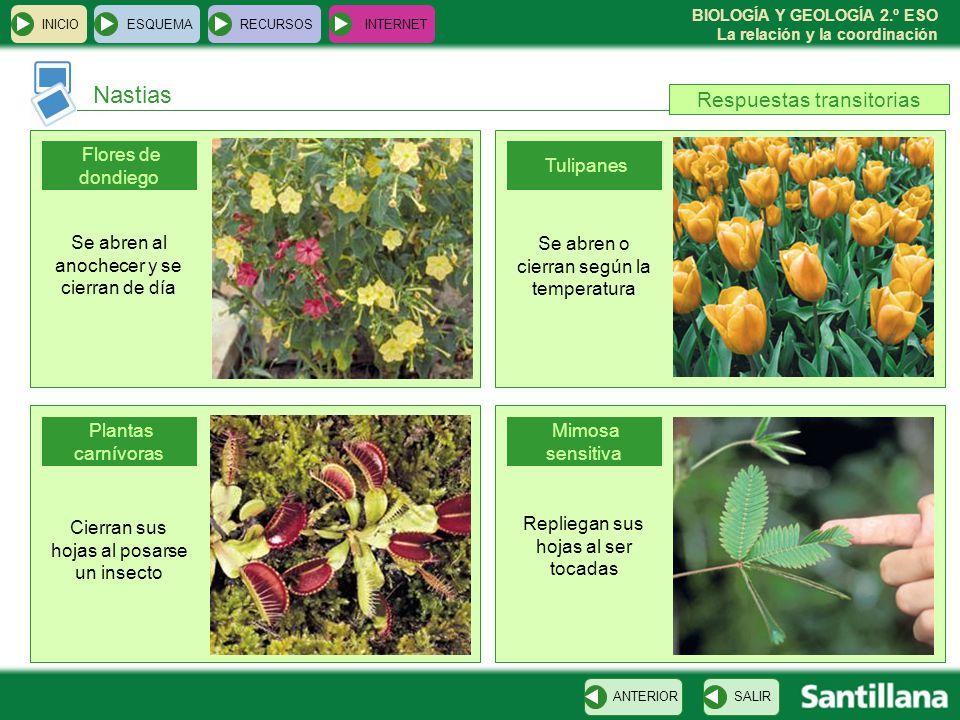 BIOLOGÍA Y GEOLOGÍA 2.º ESO La relación y la coordinación Nastias INICIOESQUEMARECURSOSINTERNET SALIRANTERIOR Flores de dondiego Plantas carnívoras Tu