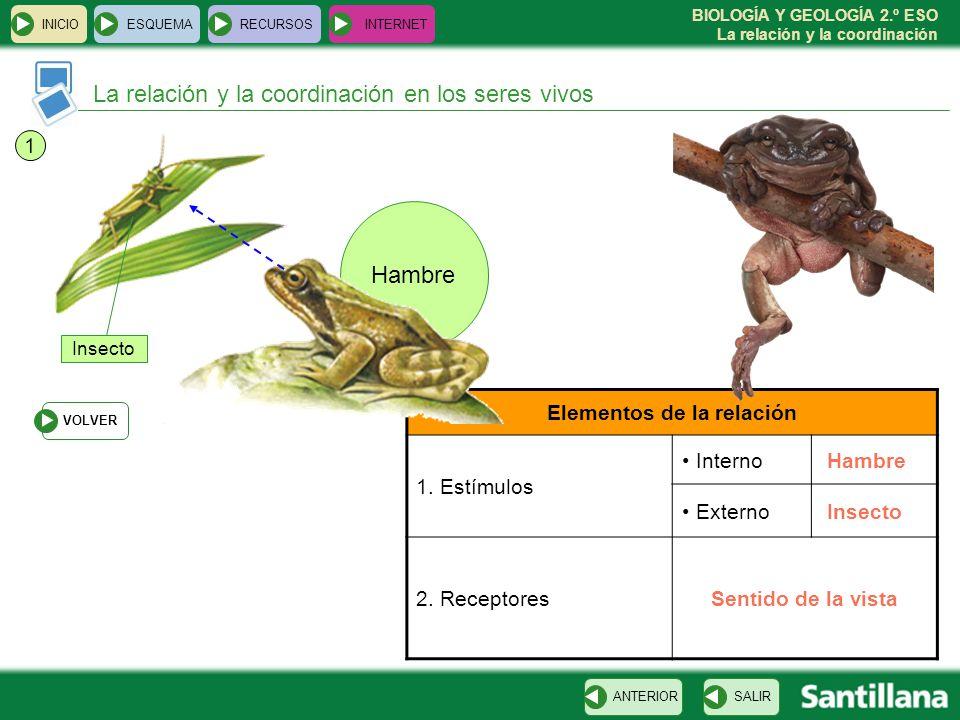 BIOLOGÍA Y GEOLOGÍA 2.º ESO La relación y la coordinación Hambre La relación y la coordinación en los seres vivos INICIOESQUEMARECURSOSINTERNET SALIRA