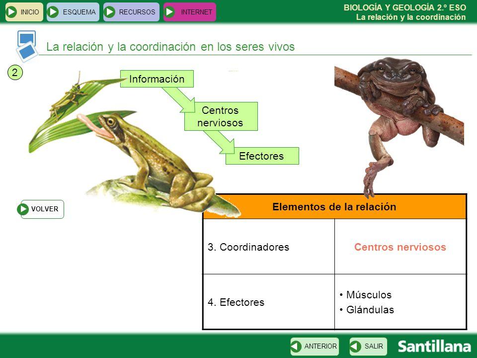 BIOLOGÍA Y GEOLOGÍA 2.º ESO La relación y la coordinación Efectores Centros nerviosos Información La relación y la coordinación en los seres vivos INI