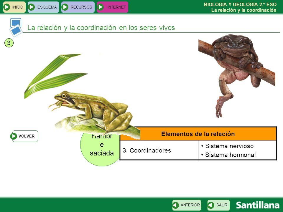 BIOLOGÍA Y GEOLOGÍA 2.º ESO La relación y la coordinación Hambr e saciada La relación y la coordinación en los seres vivos INICIOESQUEMARECURSOSINTERN