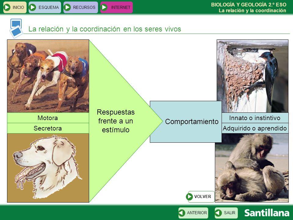 BIOLOGÍA Y GEOLOGÍA 2.º ESO La relación y la coordinación Comportamiento INICIOESQUEMARECURSOSINTERNET La relación y la coordinación en los seres vivo