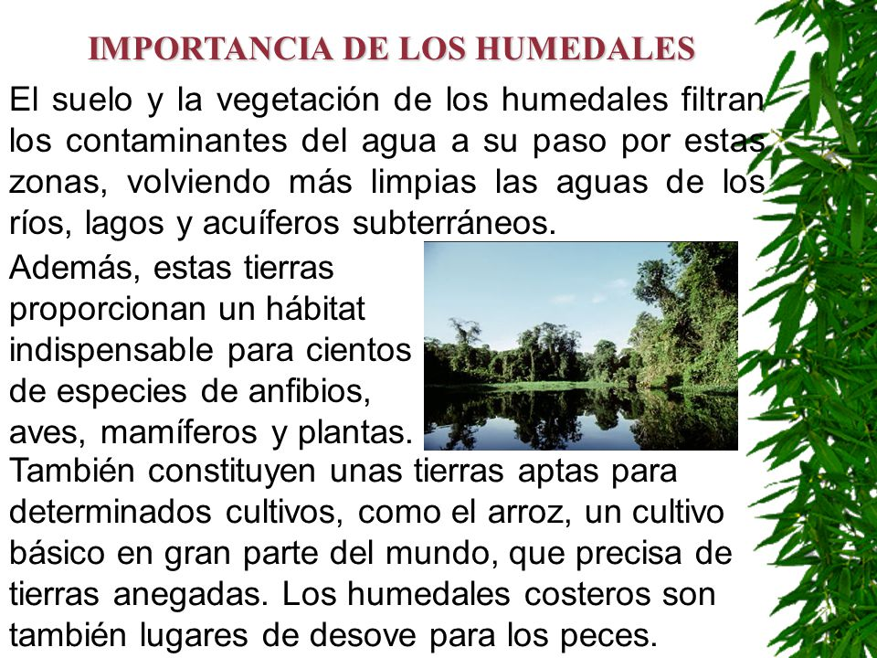 El suelo y la vegetación de los humedales filtran los contaminantes del agua a su paso por estas zonas, volviendo más limpias las aguas de los ríos, l