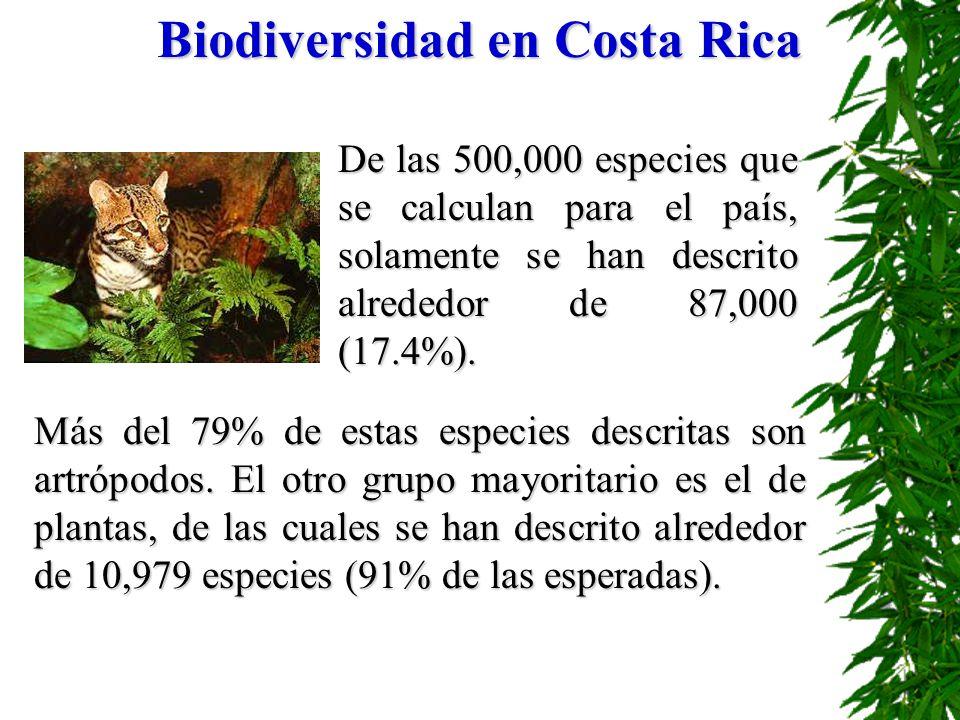 Biodiversidad en Costa Rica De las 500,000 especies que se calculan para el país, solamente se han descrito alrededor de 87,000 (17.4%). Más del 79% d