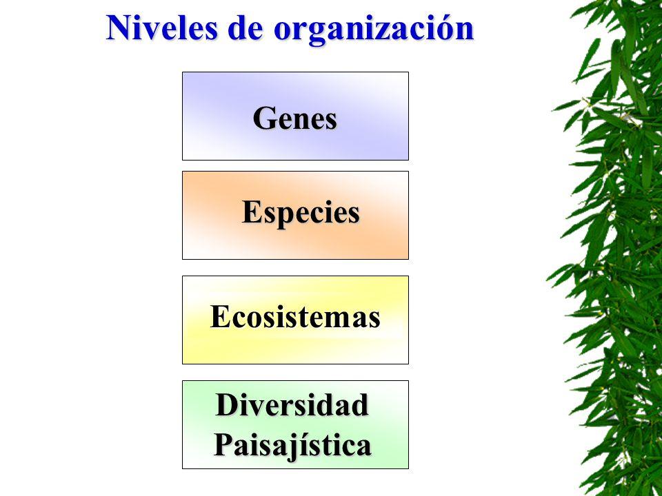 Genes Especies Ecosistemas DiversidadPaisajística Niveles de organización