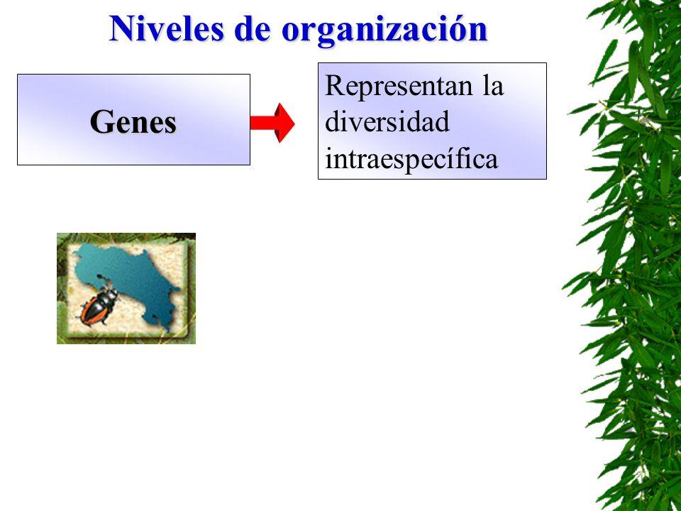 Genes Representan la diversidad intraespecífica