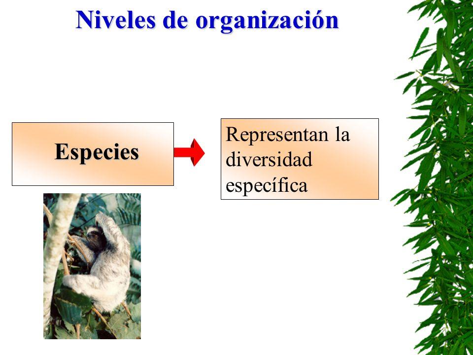 Niveles de organización Especies Representan la diversidad específica