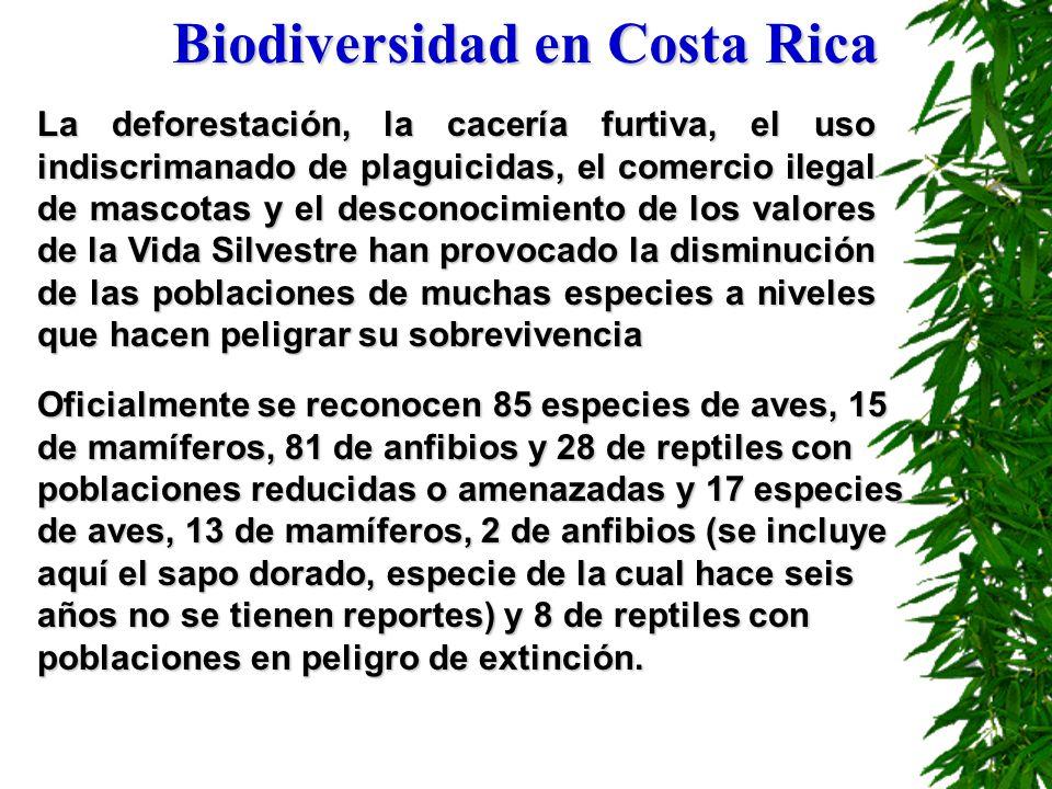 Biodiversidad en Costa Rica Oficialmente se reconocen 85 especies de aves, 15 de mamíferos, 81 de anfibios y 28 de reptiles con poblaciones reducidas