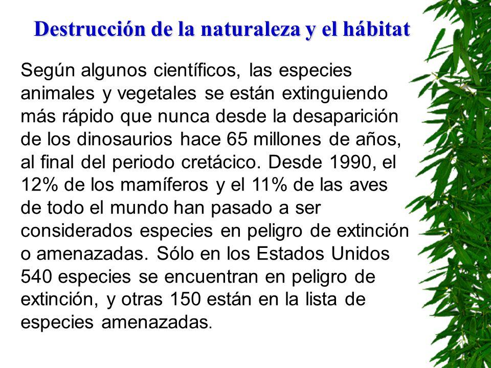 Destrucción de la naturaleza y el hábitat La pérdida de biodiversidad tiene numerosas repercusiones aparte de la desaparición de especies individuales, debido a la necesidad de ésta para mantener los ciclos naturales esenciales para la supervivencia humana.