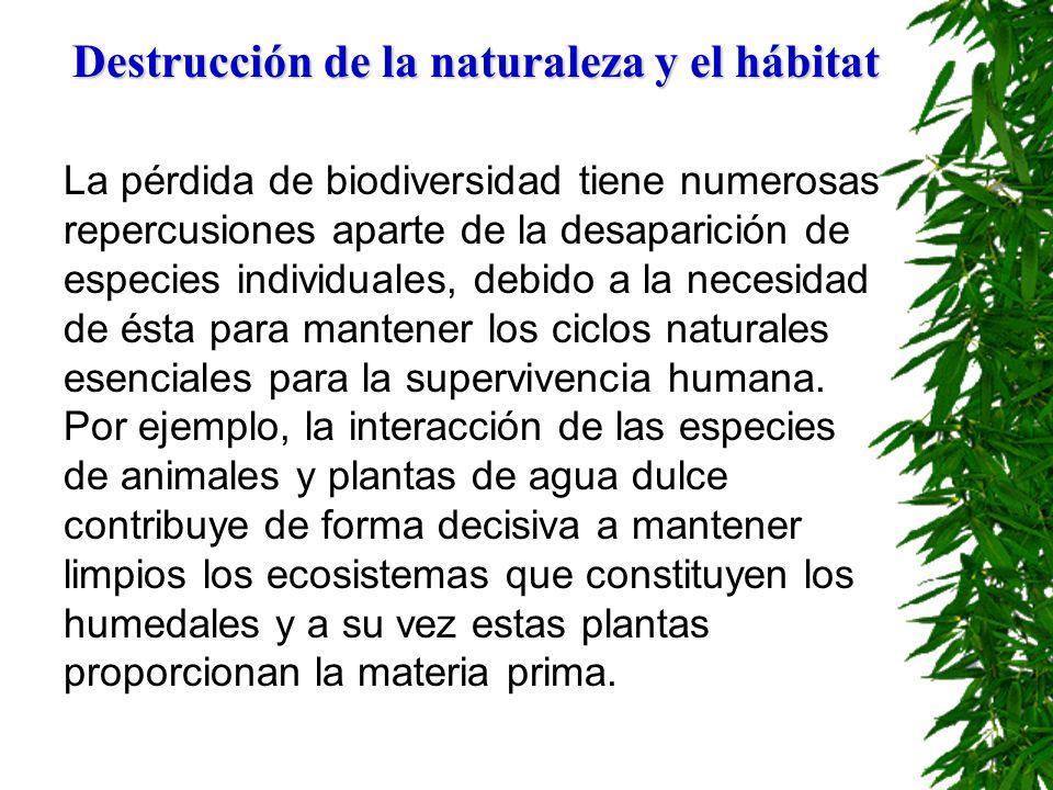 Destrucción de la naturaleza y el hábitat La pérdida de biodiversidad tiene numerosas repercusiones aparte de la desaparición de especies individuales