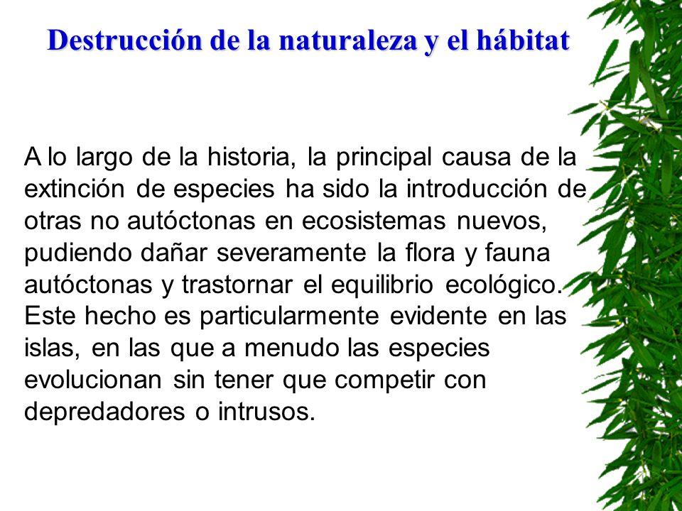 PÉRDIDA DEL HÁBITAT Y CAZA FURTIVA segundo La pérdida del hábitat es el segundo factor implicado en la desaparición de especies.