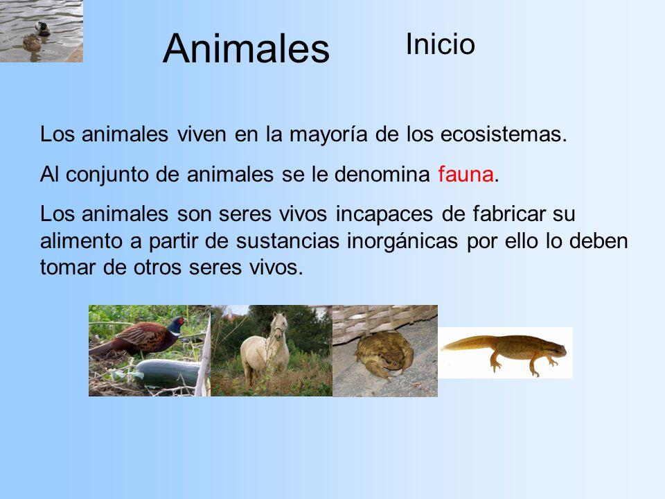 Animales Inicio Los animales viven en la mayoría de los ecosistemas. Al conjunto de animales se le denomina fauna. Los animales son seres vivos incapa