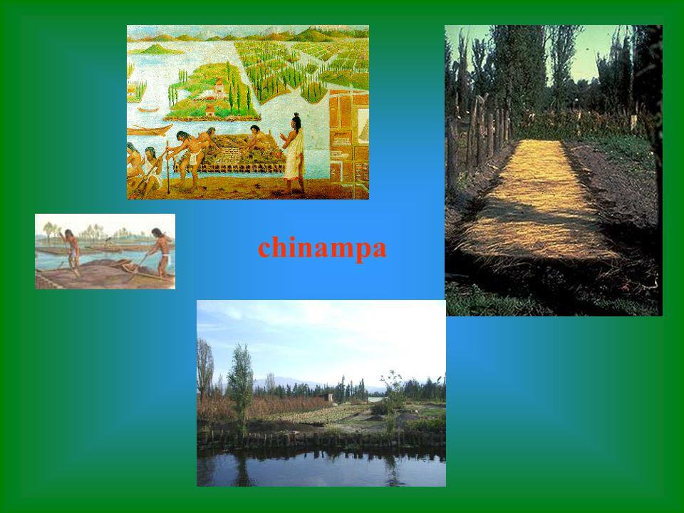 Las chihampas eran islas flotantes en las que funcionaba el sistema de cultivo de los aztecas Ellos construían canales entre las chinampas y puentes q