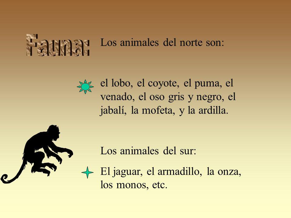 Los animales del norte son: el lobo, el coyote, el puma, el venado, el oso gris y negro, el jabalí, la mofeta, y la ardilla.