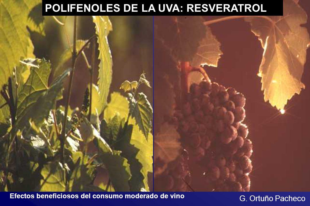 POLIFENOLES DE LA UVA: RESVERATROL Efectos beneficiosos del consumo moderado de vino G. Ortuño Pacheco