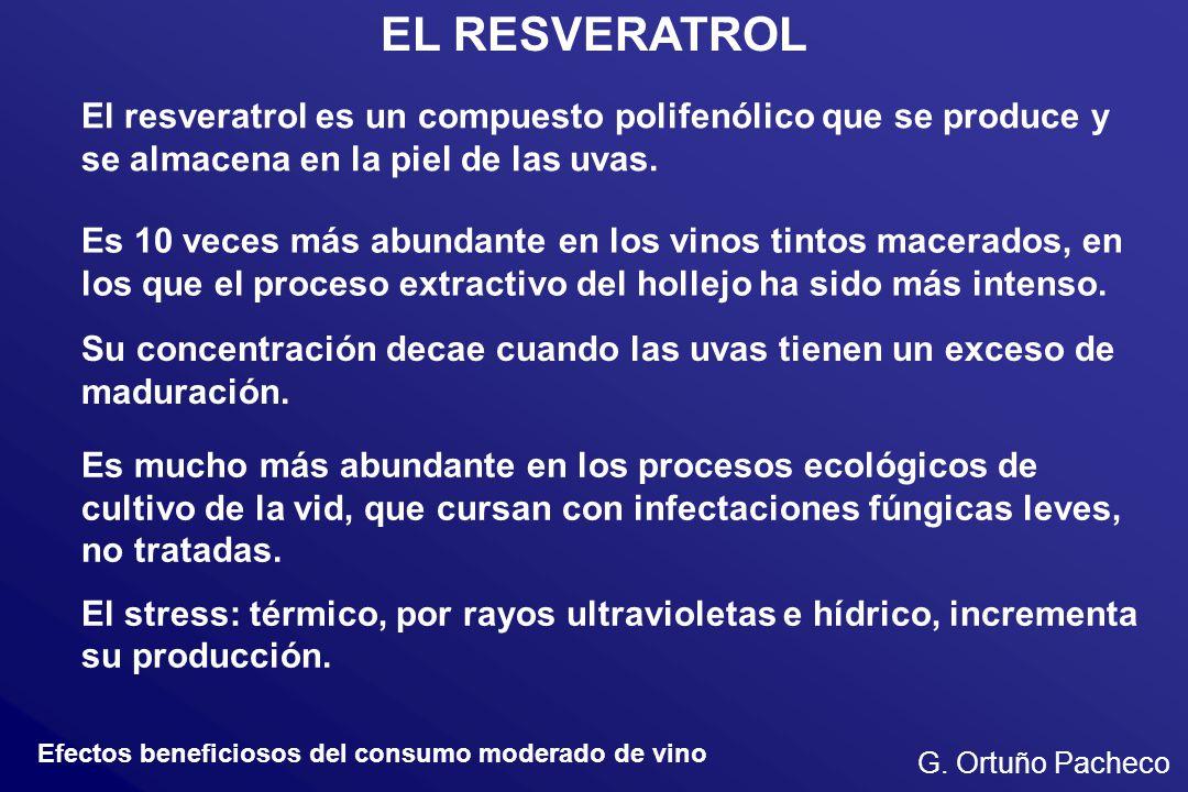 EL RESVERATROL El resveratrol es un compuesto polifenólico que se produce y se almacena en la piel de las uvas. Es 10 veces más abundante en los vinos