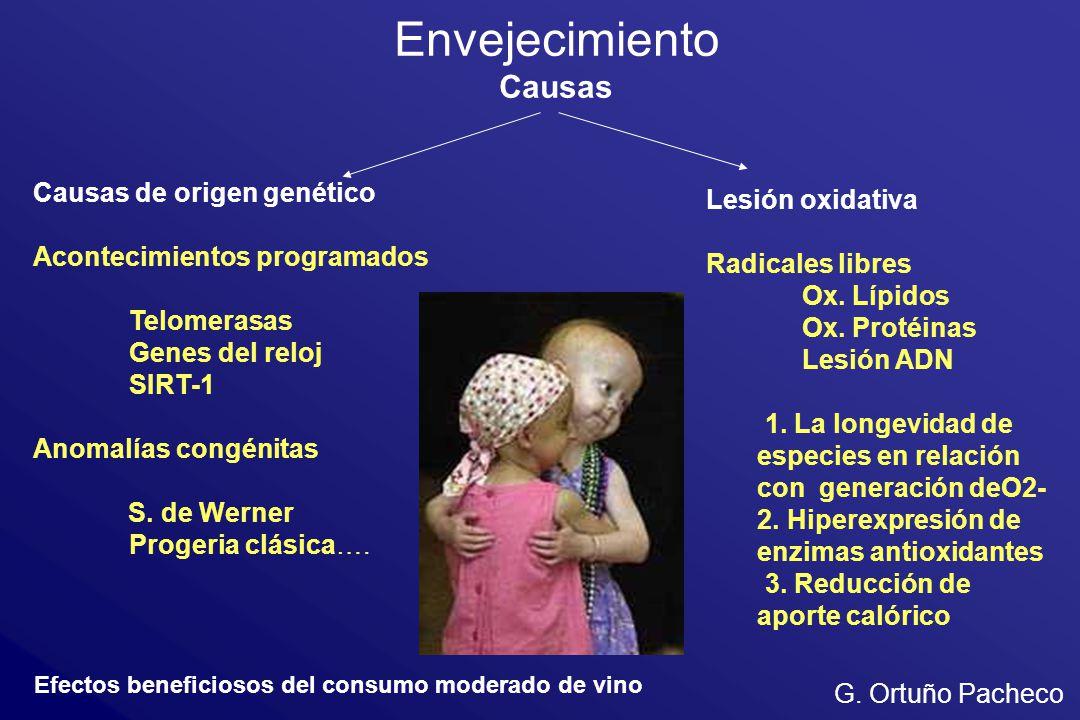 Causas de origen genético Acontecimientos programados Telomerasas Genes del reloj SIRT-1 Anomalías congénitas S. de Werner Progeria clásica…. Lesión o