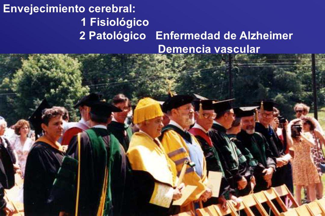 Envejecimiento cerebral: 1 Fisiológico 2 Patológico Enfermedad de Alzheimer Demencia vascular