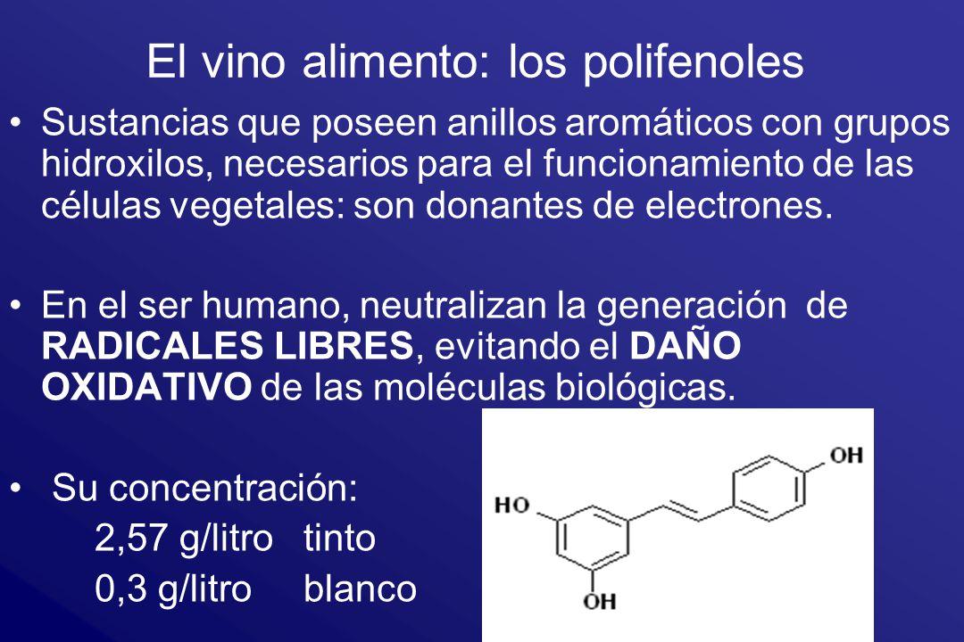 El vino alimento: los polifenoles Sustancias que poseen anillos aromáticos con grupos hidroxilos, necesarios para el funcionamiento de las células veg