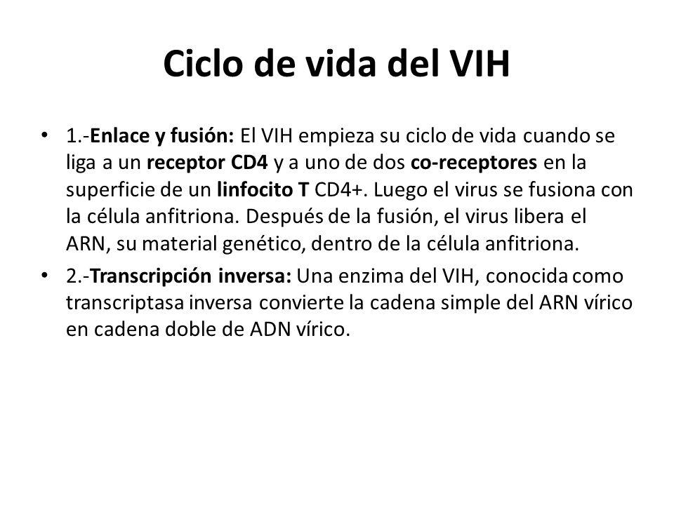 Ciclo de vida del VIH 1.-Enlace y fusión: El VIH empieza su ciclo de vida cuando se liga a un receptor CD4 y a uno de dos co-receptores en la superfic
