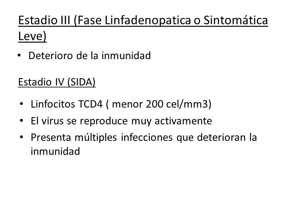 Estadio III (Fase Linfadenopatica o Sintomática Leve) Deterioro de la inmunidad Estadio IV (SIDA) Linfocitos TCD4 ( menor 200 cel/mm3) El virus se rep