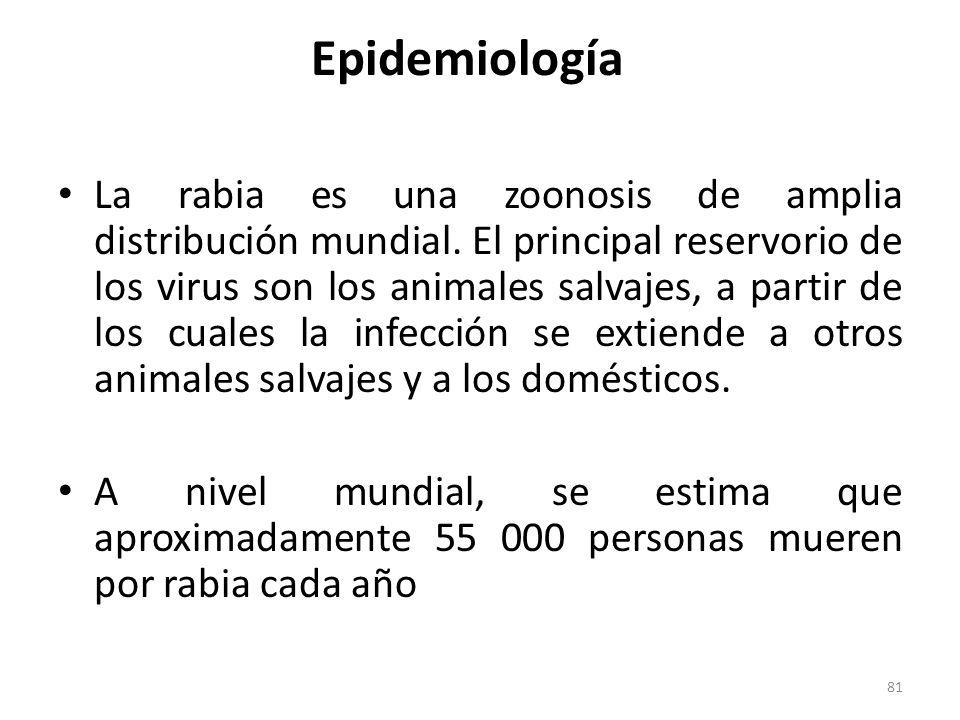 Epidemiología La rabia es una zoonosis de amplia distribución mundial. El principal reservorio de los virus son los animales salvajes, a partir de los