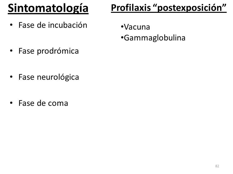 Sintomatología Fase de incubación Fase prodrómica Fase neurológica Fase de coma 82 Profilaxis postexposición Vacuna Gammaglobulina