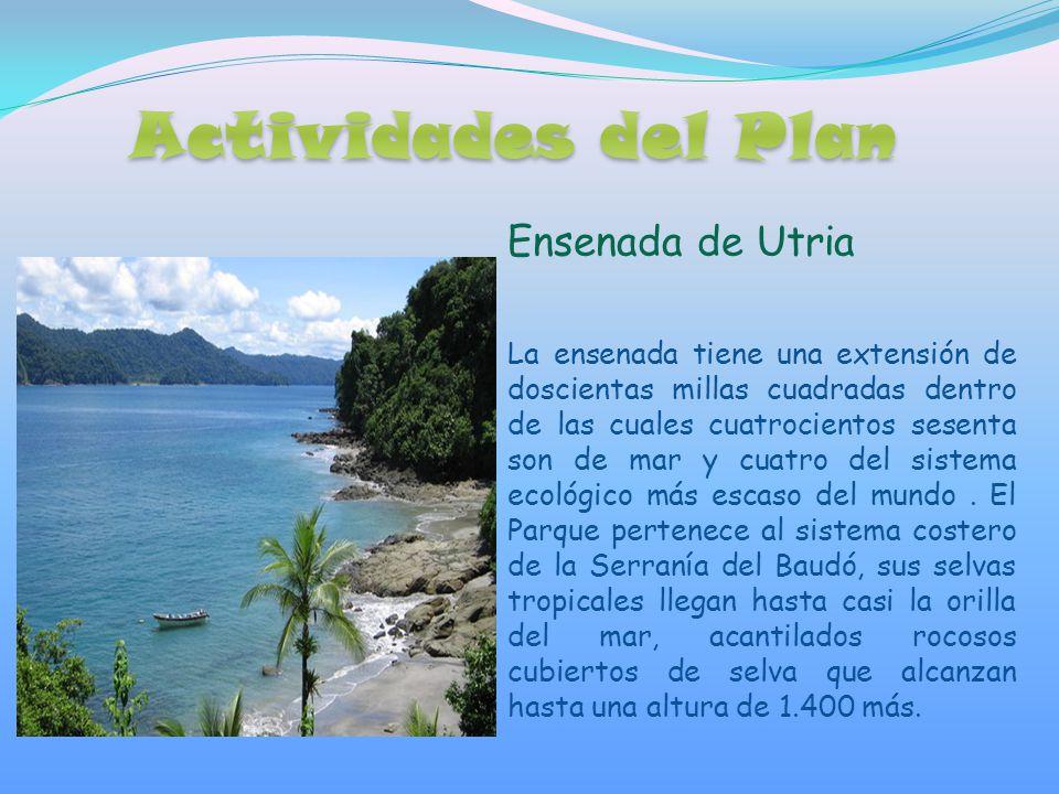 Ensenada de Utria La ensenada tiene una extensión de doscientas millas cuadradas dentro de las cuales cuatrocientos sesenta son de mar y cuatro del sistema ecológico más escaso del mundo.