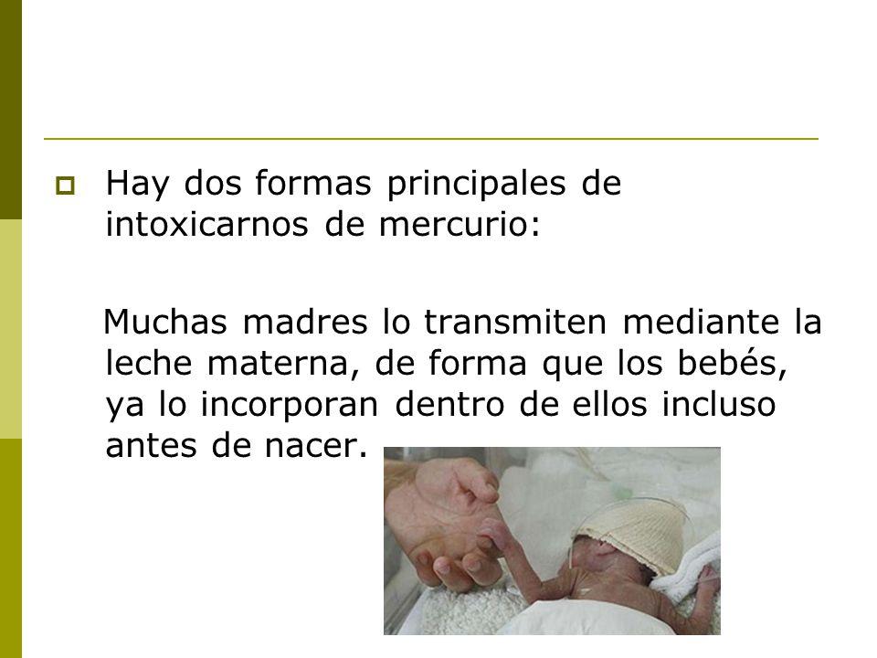 Hay dos formas principales de intoxicarnos de mercurio: Muchas madres lo transmiten mediante la leche materna, de forma que los bebés, ya lo incorpora