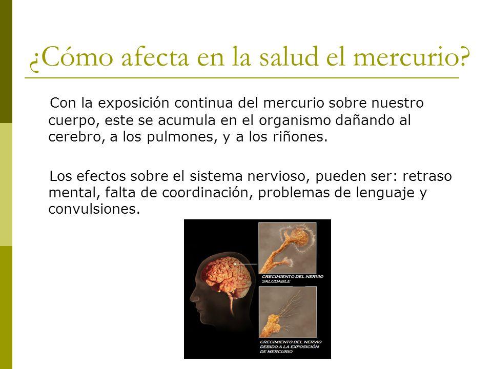 ¿Cómo afecta en la salud el mercurio? Con la exposición continua del mercurio sobre nuestro cuerpo, este se acumula en el organismo dañando al cerebro