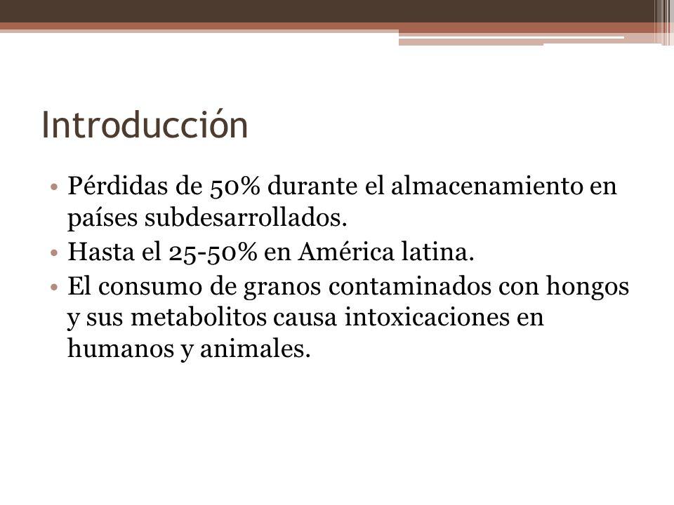 Introducción Pérdidas de 50% durante el almacenamiento en países subdesarrollados. Hasta el 25-50% en América latina. El consumo de granos contaminado
