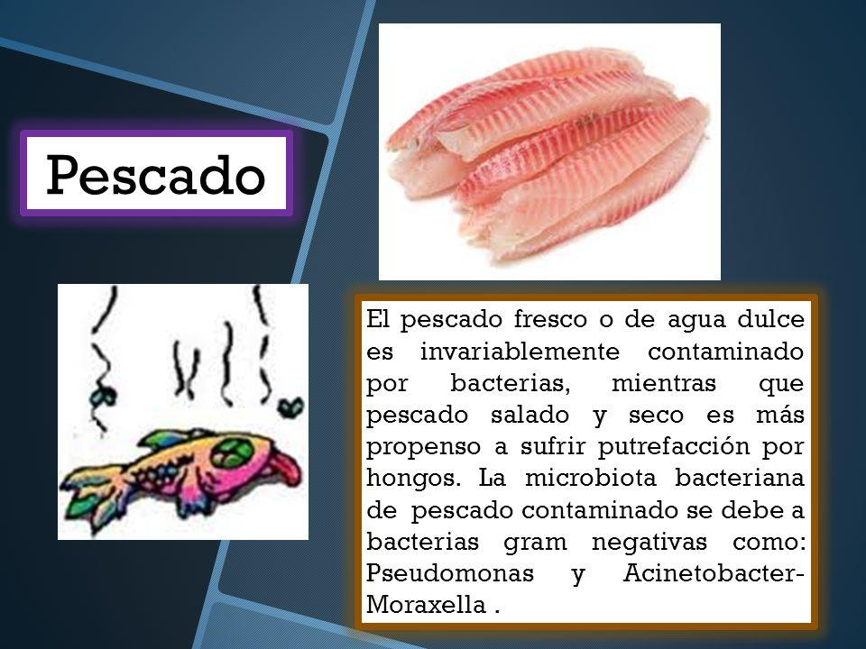 El pescado fresco o de agua dulce es invariablemente contaminado por bacterias, mientras que pescado salado y seco es más propenso a sufrir putrefacci