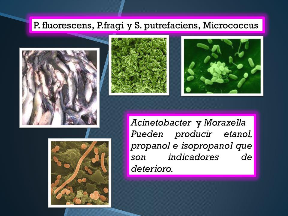 P. fluorescens, P.fragi y S. putrefaciens, Micrococcus Acinetobacter y Moraxella Pueden producir etanol, propanol e isopropanol que son indicadores de