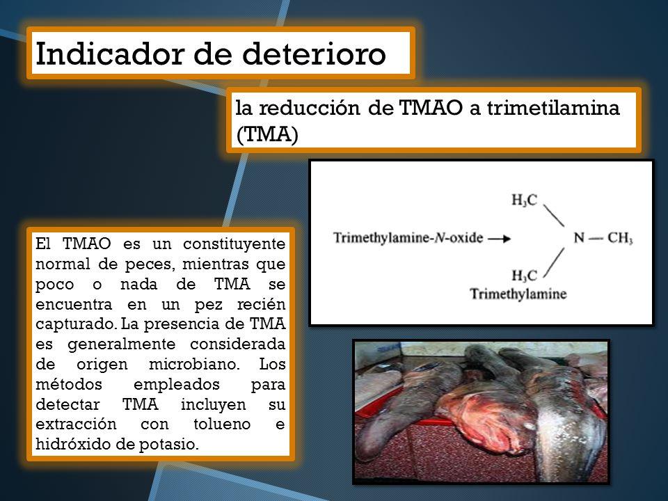 Indicador de deterioro la reducción de TMAO a trimetilamina (TMA) El TMAO es un constituyente normal de peces, mientras que poco o nada de TMA se encu