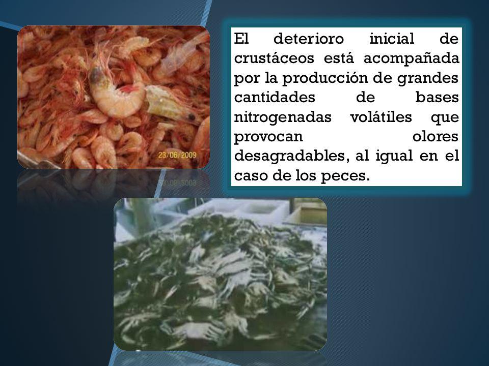 El deterioro inicial de crustáceos está acompañada por la producción de grandes cantidades de bases nitrogenadas volátiles que provocan olores desagra