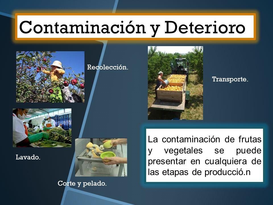 Contaminación y Deterioro La contaminación de frutas y vegetales se puede presentar en cualquiera de las etapas de producció.n Recolección. Transporte
