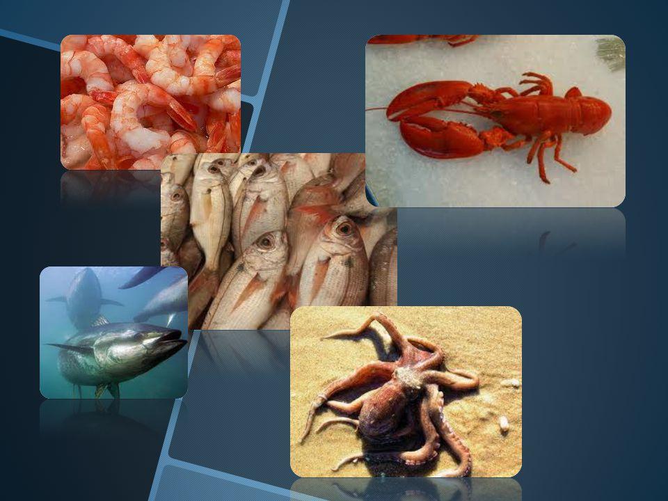 Moluscos El término molusco considera a los mariscos como las ostras, almejas, calamares y pulpos.