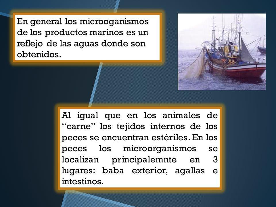 En general los microoganismos de los productos marinos es un reflejo de las aguas donde son obtenidos. Al igual que en los animales de carne los tejid