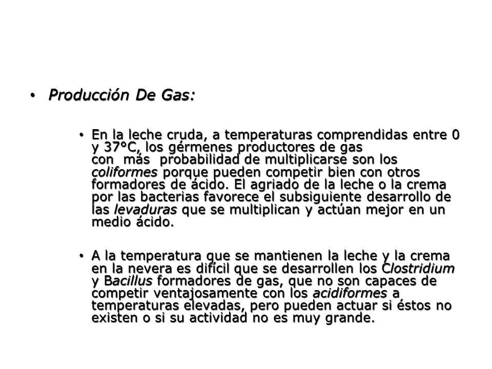 Producción De Gas: Producción De Gas: En la leche cruda, a temperaturas comprendidas entre 0 y 37°C, los gérmenes productores de gas con más probabili