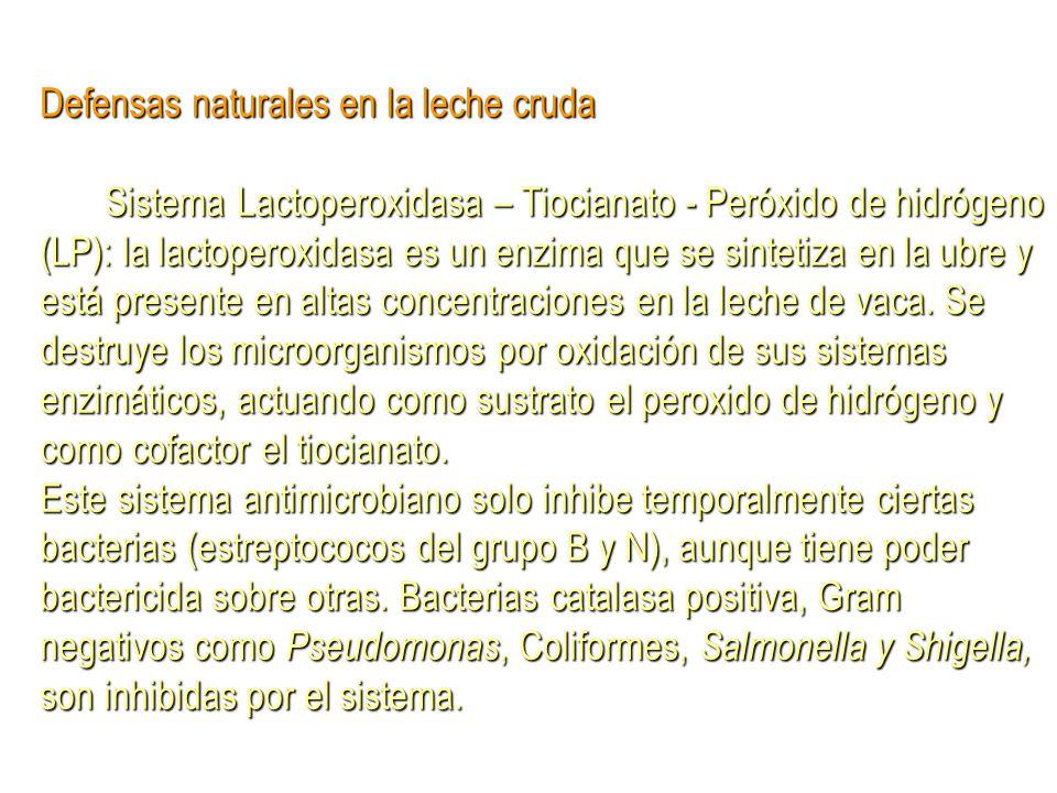 Defensas naturales en la leche cruda Sistema Lactoperoxidasa – Tiocianato - Peróxido de hidrógeno (LP): la lactoperoxidasa es un enzima que se sinteti