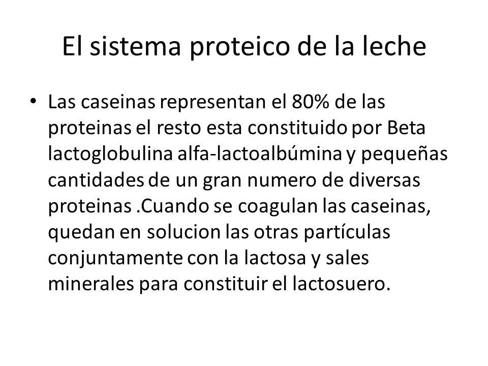 El sistema proteico de la leche Las caseinas representan el 80% de las proteinas el resto esta constituido por Beta lactoglobulina alfa-lactoalbúmina