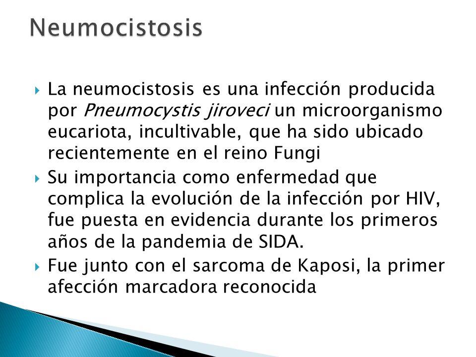 La neumocistosis es una infección producida por Pneumocystis jiroveci un microorganismo eucariota, incultivable, que ha sido ubicado recientemente en