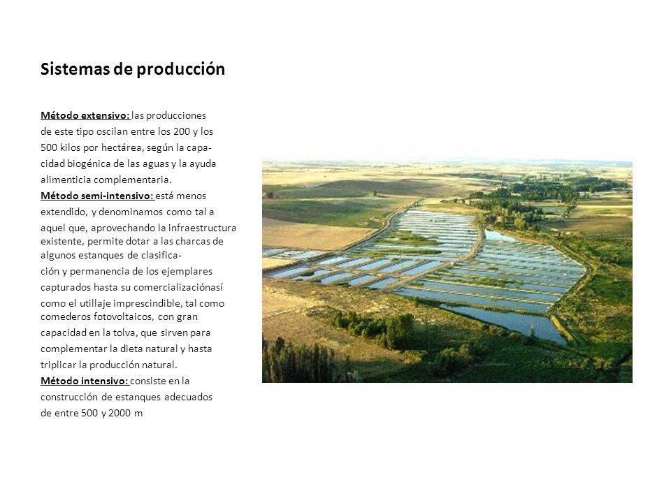 Sistemas de producción Método extensivo: las producciones de este tipo oscilan entre los 200 y los 500 kilos por hectárea, según la capa- cidad biogén