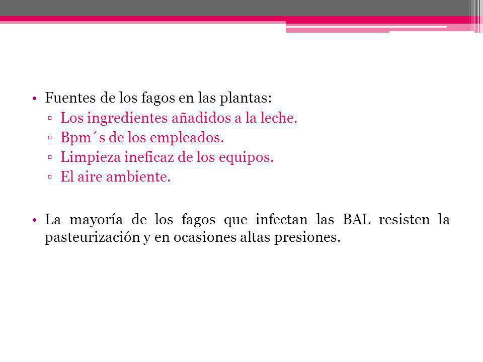 Fuentes de los fagos en las plantas: Los ingredientes añadidos a la leche.