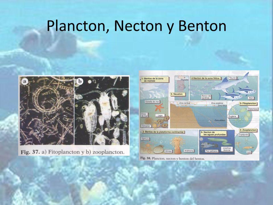 Plancton, Necton y Benton