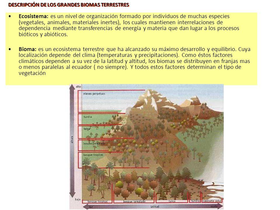 DESCRIPCIÓN DE LOS GRANDES BIOMAS TERRESTRES Ecosistema: es un nivel de organización formado por individuos de muchas especies (vegetales, animales, m