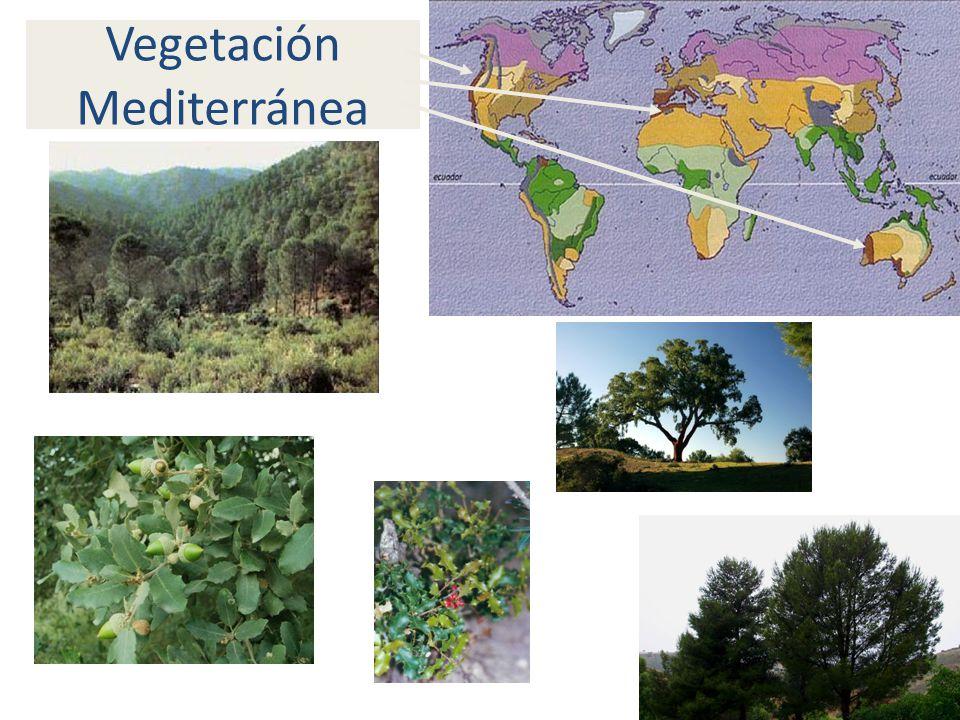 Vegetación Mediterránea