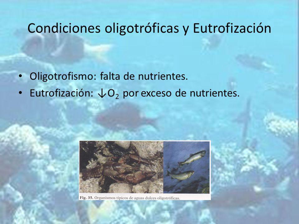 Condiciones oligotróficas y Eutrofización Oligotrofismo: falta de nutrientes. Eutrofización: O 2 por exceso de nutrientes.