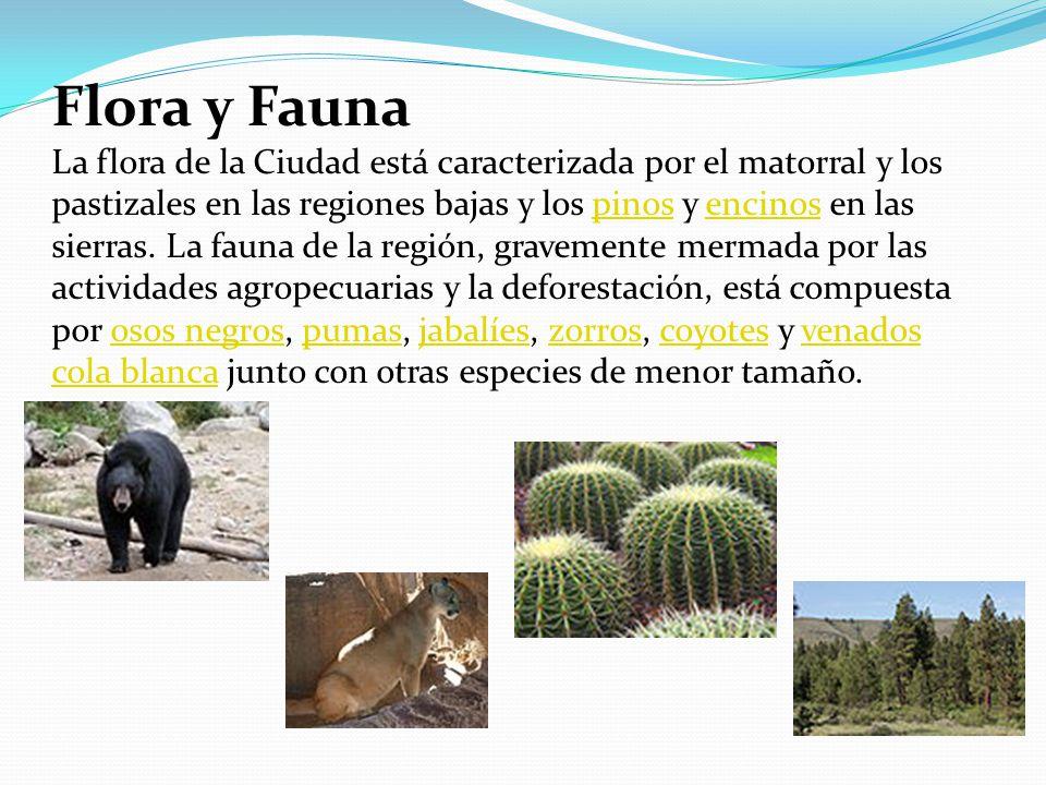 Flora y Fauna La flora de la Ciudad está caracterizada por el matorral y los pastizales en las regiones bajas y los pinos y encinos en las sierras.